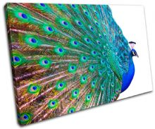 Peacock Feathers Animals - 13-0970(00B)-SG32-LO